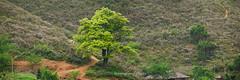 _Y2U8997+04+11.0417.Tà Xùa.Bắc Yên.Sơn La (hoanglongphoto) Tags: asia asian vietnam northvietnam northwestvietnam nature landscape scenery vietnamlandscape vietnamscenery vietnamscene outdoor tree hill hillside plant canon canoneos1dx canonef200mmf28liiusm2xiii tâybắc sơnla bắcyên tàxùa thiênnhiên phongcảnh thựcvật cây ngọnđồi sườnđồi phongcảnhtàxùa câytàxùa câyviệtnam panorama