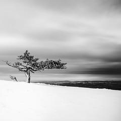 (Mat-S) Tags: pilat rhonealpes tree snow neige mountain montagne longexposure expositionlongue lonetree blackandwhite noiretblanc