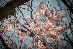 Spring (Luiz Henrique Assuno) Tags: flores primavera spring olympus