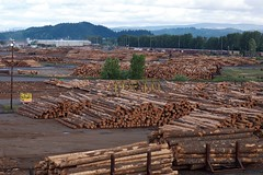 Weyerhaeuser raw log exports (Sam Beebe, Ecotrust) Tags: washington log forestry timber logs longview shipping weyerhaeuser export rawlogexport portoflongview