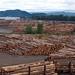 Weyerhaeuser raw log exports