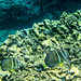 reef fish (nosha) Tags: ocean sea orange usa fish green beautiful beauty rock hawaii oahu snorkeling northshore sharkscove feef