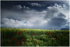 los royos III (muliterno) Tags: campos losroyos