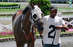 Warming in the paddock (Lorianne DiSabato) Tags: sports boston racetrack ma massachusetts racing horseracing eastboston suffolkdowns