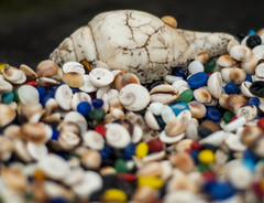 Sea shells by the sea shore (poonam.agarwal.s) Tags: sea india 50mm seashell streetmarket dwarka piligrimage templetown
