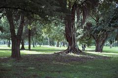 La Plata (Vra Ada Daye) Tags: park trees people film argentina 35mm buenosaires nikon couple bosque analogue 135 nikonfm2 laplata