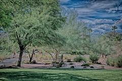 Wellness park, Ruth Hardy Park #1 Palm Springs, CA (Disney Pin Hunters) Tags: california usa water yoga 1 parking palmsprings dry tennis courts ruthhardypark wellnesspark ruthhardywellnessparkpalmspringsfitnessexercisegrassbarbequebbqpartyclownpicnicpalmtreemexicanbirdofparadisepathwaydripirrigation