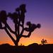 1st Place - Scenics - Frank Zurey - Joshua Tree NP