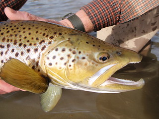 Montana Bighorn River Fishing Lodge 11