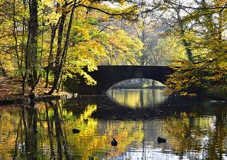 Brücke im Stadtwald