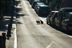 cats on a road (Tania's Tales) Tags: road street city cats animal backlight cat mammal feline streetphotography stray parkedcars        fotografiastradale taniastales
