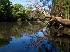 Lazy Day! (TonyinAus) Tags: reflections river australia kendall