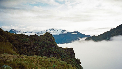 In the cloud forest on the Inca trail, Peru