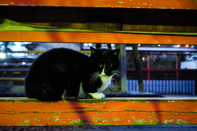 Today's Cat@2013-12-21