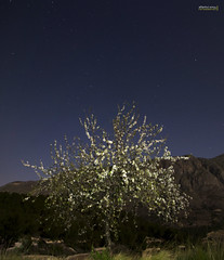 Ametlers en flor (reloaded) ( alfanhu) Tags: panorama flores tree night noche nightshot blossom alt almond bloom nocturna sella nit florido almendro panormica tamron1750 noctmbulo ametler xarquer