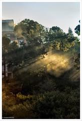 Enlightenment (ZeePack) Tags: morning light india mist canon dawn buddhism grand holy sacred tibetan rays beams dharamsala himachalpradesh surise sherabling 5dmarkiii palpungsherabling kentingtaisitupa