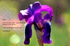 Seeds (Don Iannone) Tags: iris flower imagepoetry poeticimage derkjanssen poemandpicture