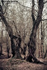 Chamestan (Arash Sefid) Tags: tree nikon iran north arash hdr treee sefid 24120 d700 chamestan
