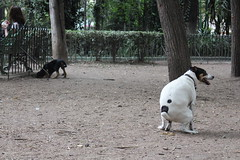 Dogs doing their stuff (manuelvaladezacuña) Tags: park parque white black dogs dump el perro shit perros dumping shitting ody cagando