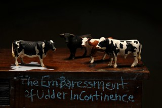 The Embaressment of Udder Incontinence