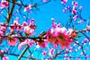 AĞAÇLARIN. . . (murathanduran1) Tags: bahar spring tepekent büyükçekmece istanbul türkiye turkey fotoğraf photo çiçekler flowers ağaç tree