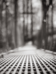 The path is not always clear (Vincent F Tsai) Tags: bokeh blur minolta vintage bridge walk way hike woods park manual metabones spring dof monochrome blackandwhite panasonic lumixgx8