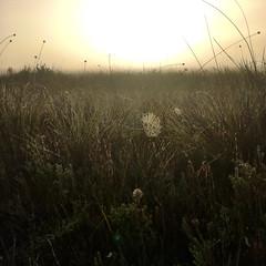 Spiderwebs. Early morning. Melaleuca. Port Davey, Tasmania.