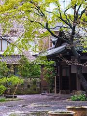 Quiet after the rain (tokyoshooter) Tags: japan tokyo shinjuku shrine fujifilm fuji gfx 50s 120mm