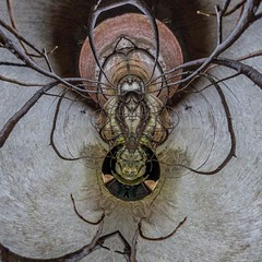 Spider abstraction (dqpagan) Tags: arachnid bugging buggy insects insect bugs bug spiders creative edits edit art rusted abstract spider