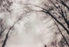 (gruss.mir) Tags: 35mm dreamscape film ishootfilm landscape pinhole print scan xp2