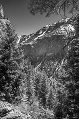 Spring Mountains Noontime (59roadking - Jim Johnston) Tags: ifttt 500px trees forest mountains spring rocks snow nevada las vegas