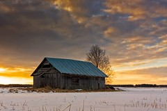 Sunset On The Snowy Fields (k009034) Tags: 500px sky sunset nature window clouds old tree building snow birch fields countryside agriculture barn rural wooden springtime no people finland tranquil scene copy space oulainen matkaniva teamcanon