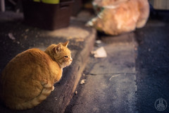 Waiting for my dinner. (taga928s4(Akira.T_JPN)) Tags: akira tagawa アキラ タガワ cat street night asakusa tokyo japan backstreet alley 50mm