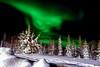 Aurore (Littlepois Photographie) Tags: nikon d4 ltillepois nikon2470f28 lr4 finlande finland laponie ciel sky sapin neige aurore boréale auroreboréale étoiles