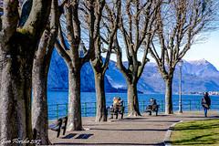 Inizio Marzo, attendendo la primavera (Gian Floridia) Tags: lecco alberi azzurro beginning contemplazione inizio lago lungolago march marzo panchine pausa primavera scheletri sole sosta spogli springtime tranquillità