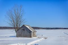 Soleil sans chaleur (alex.bernard) Tags: saintdenissurrichelieu hiver winter froid cold paysage landscape campagne grange barn champs ferme fileds farm