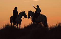 START OF DAY07 (Becks341) Tags: horses ponies horsemanship sunrise sky orange riders skill solitude silhouette
