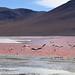 Bolívia, Laguna Colorada