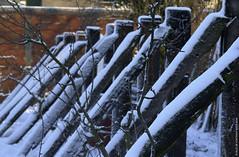 Poutres poudrées (Fontenay-sous-Bois Officiel FRANCE) Tags: fontenay fontenaysousbois valdemarne 94 94120 iledefrance regionparisienne france fsb winter snow neige hiver nikon nikond1 bois wood weatheredwood froid cold outside exterieur