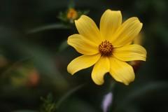 IMG_6203 (aalonsofotografia) Tags: 50mm flor sanisidro buenosaires resrvaecologica fotografia