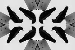 Mechanical Murder (Anxious Silence) Tags: crow corvid bird nature wildlife illustration composite symmetry pattern blackandwhite sky