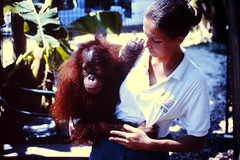 1994-08-30 Miami 22 (MicdeF) Tags: 1994 florida miami monkey parrotjungle scimmia statiunitidamerica usa uniitedstates geo:lat=2578635040 geo:lon=8017477330 geotagged nikonem
