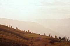 (obnimakina) Tags: film 2016 pakistan hills mountains heaven conifers sunset outdoor landscape khyberpakhtunkhwaprovince himalayas paye makrapeak shogran siripaye