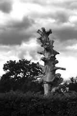 Dead Tree B&W (wairua.photography) Tags: dead tree nature blackandwhite