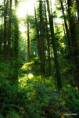 Ray of hope (upayankita) Tags: d3200 travel sun light mcleod gunj dharamshala india forest trees greenery