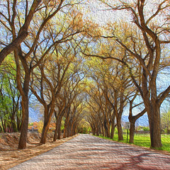 Mariquita Lane (Helen Orozco) Tags: mariquitalane corrales photoshop filter hss squarecrop newmexico processed oilpaint cottonwoods trees slidersunday