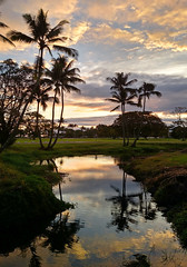 Sunrise Hilo, Hawaii (photo61guy) Tags: hawaii android cameraphone sunrise reflections waterreflections reflection goldenhour palmtrees