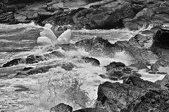 Shore at Pouch Cove 5 (LongInt57) Tags: water sea ocean rocks shore pouchcove newfoundland canada waves splashing splashes breaking ice iceberg floating action motion bw monochrome black white grey gray nature landscape spring