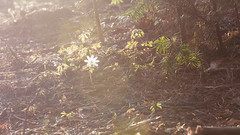 21/04/2017/ (Viсtor Million) Tags: 2470 nikkor million vicmillion nikon millionvic таштагол tashtagol siberia сибирь россия russia горнаяшория шория горная landscape mountains mountain kuzbass кузбасс 2485