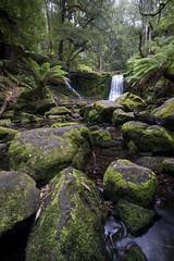 DSC05277 (nigel0577) Tags: sony alpha a99ii tasmania 1635mm ziess horseshoe falls forest green waterfall